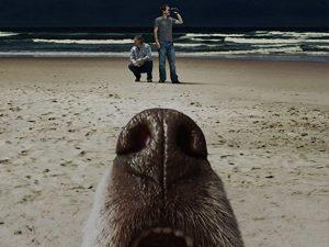 Terriers, FX